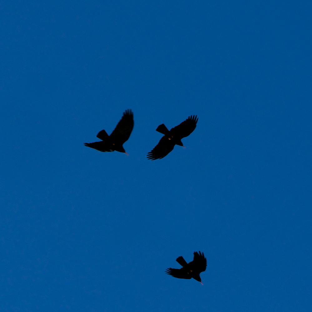 img Birds+Blue Sky.png