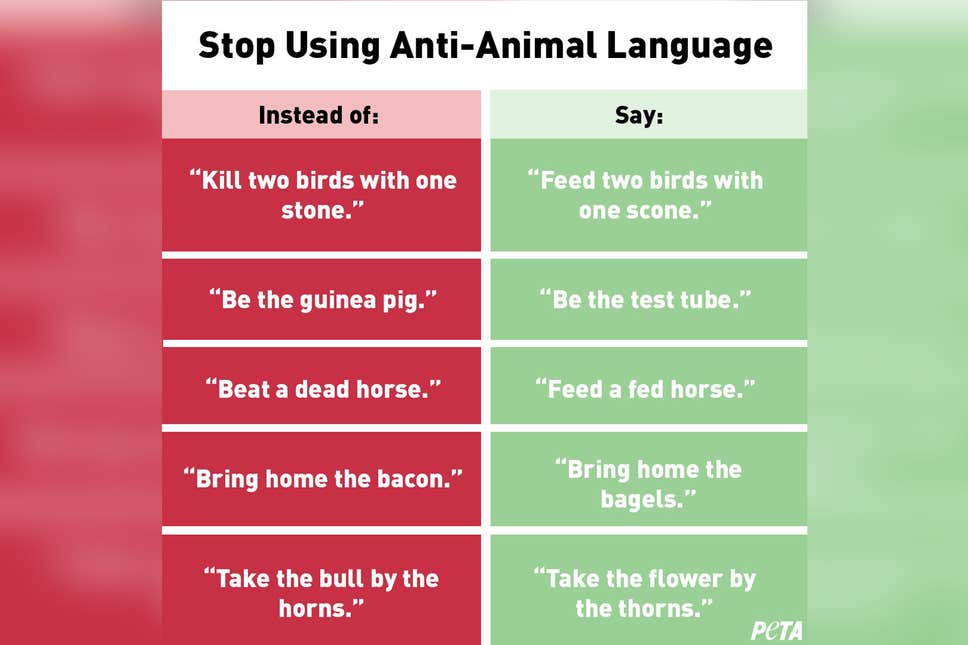 Image result for peta animal phrases