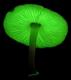 Mental Mushroom